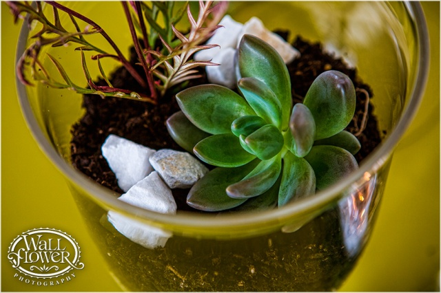Succulent Terrarium Centerpiece by Jen's Blossoms | Photo By: Wallflower Photography